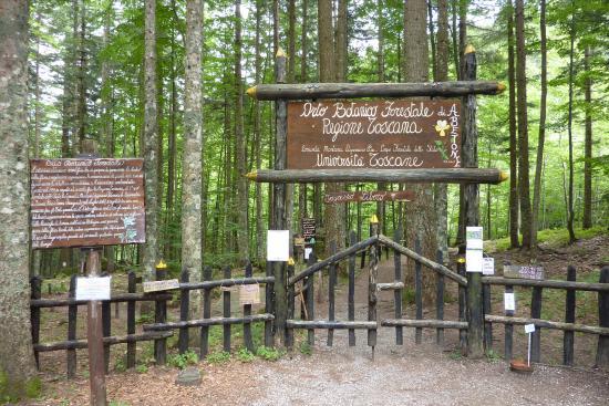 L'Orto Botanico Forestale di Abetone