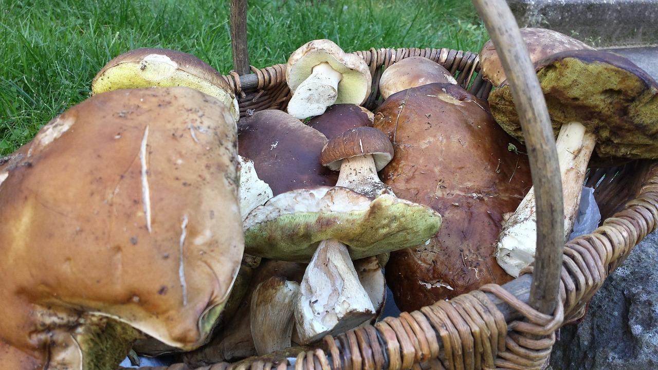 Rassegna del Fungo Fritto a Cutigliano